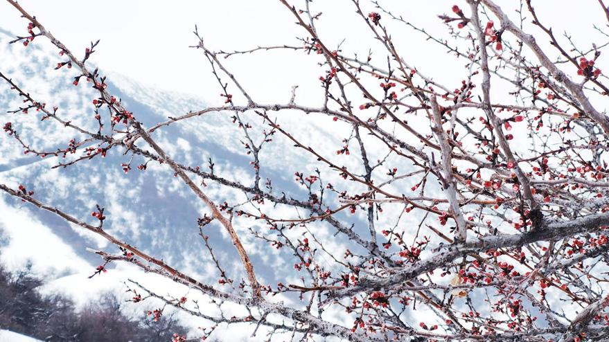 新疆是個好地方|2021年中國·那拉提杏花節開幕